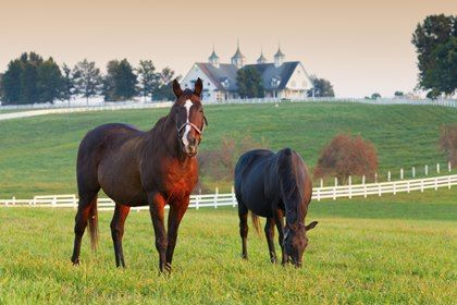 th-legacy-image-id-682-horses-in-pasture-with-barn-in-background.jpg
